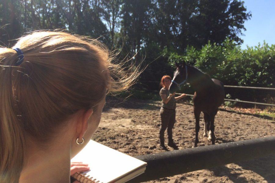 Hoe je je het beste kunt voorbereiden op een paardencoach sessie