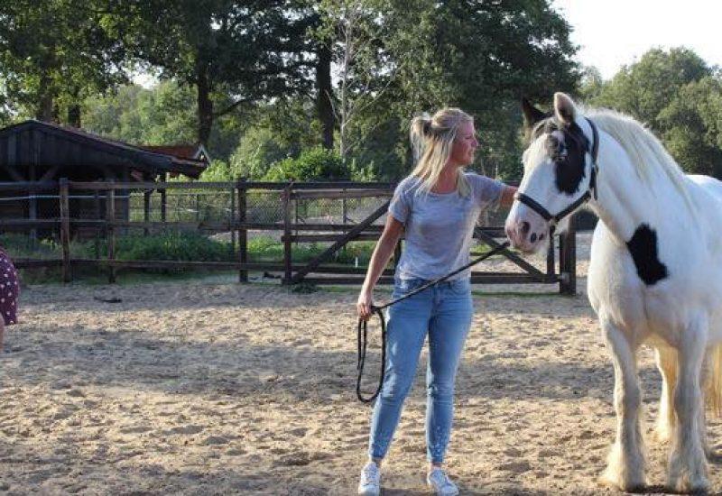 spiegelen met paarden tijdens paardencoaching in Zenderen op de Tinkerhoeve
