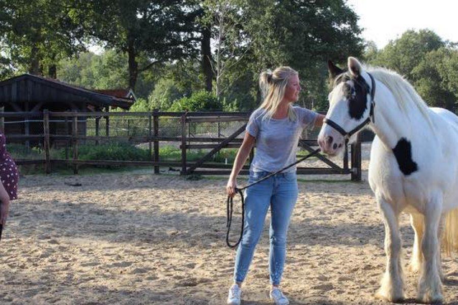 Hoe doen die paarden dat nou, dat spiegelen?