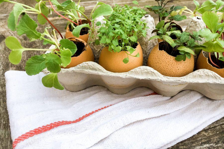 Plant je eigen moestuin in een eitje